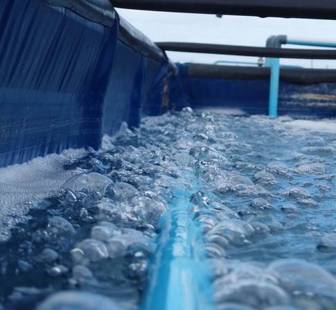 aeration aquaculture