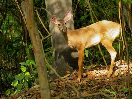 HOLCIM ECUADOR fortalece su labor de protección en Bosque Cerro Blanco, mediante la colaboración de