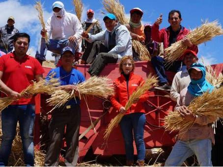 MODERNA ALIMENTOS: PROGRAMA CULTIVA cumple 10 años fomentando la producción de trigo nacional
