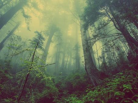 CACPECO comprometida con la forestación y reforestación de colatoa-san marcos, chan y sigchos