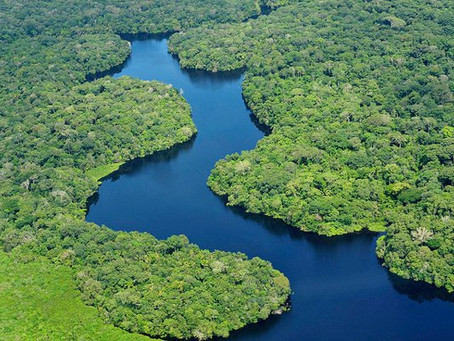 BOSQUES: LOS PROTECTORES DEL PLANETA