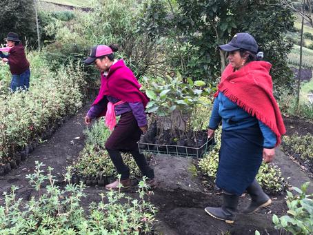 Empresa Eléctrica de Riobamba realiza siembras comunitarias en Pungalá