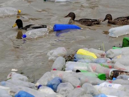 Todos los envases de plásticos que se pongan en el mercado europeo en 2030 serán reciclables