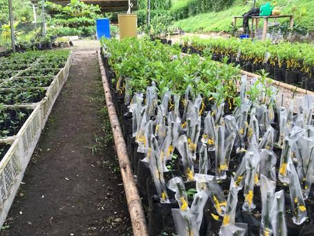SOLGOLD está desarrollando un sólido programa de reforestación