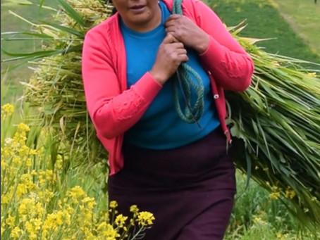 FUNDACIÓN HUMANA ECUADOR presenta su Memoria 2020