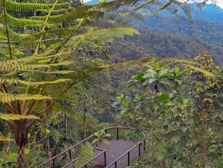 PRODUBANCO: Evolución del Crédito y Cuentas Verdes en el mercado ecuatoriano