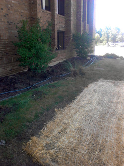 Landscape Install Near Chicago