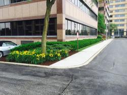 Corporate Landscape Install
