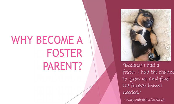 Why fostering is so important