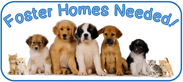 foster homes needed.jpg