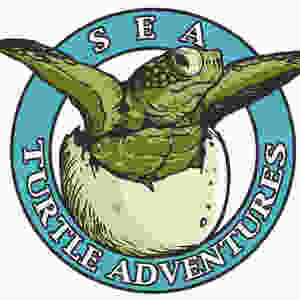 Logo design with baby turtle hatching out of shell and text reading Sea Turtle Adventures