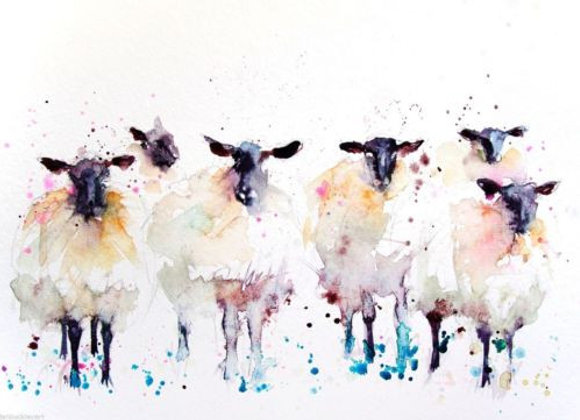 Moutons Black sheep