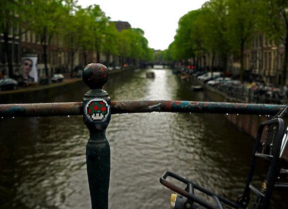 Amsterdam - champignon magique