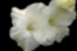 drops_PNG13504.png