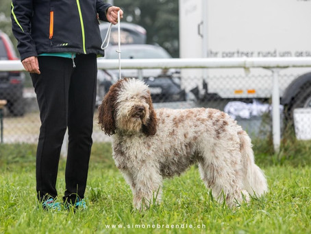 Dog Show Project in Fehraltdorf 2020