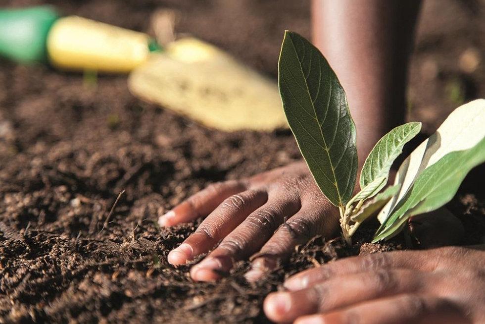 OneCGIAR-planting-image.jpg