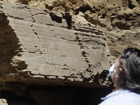 Descoberto no Côa o maior painel de arte rupestre ao ar livre