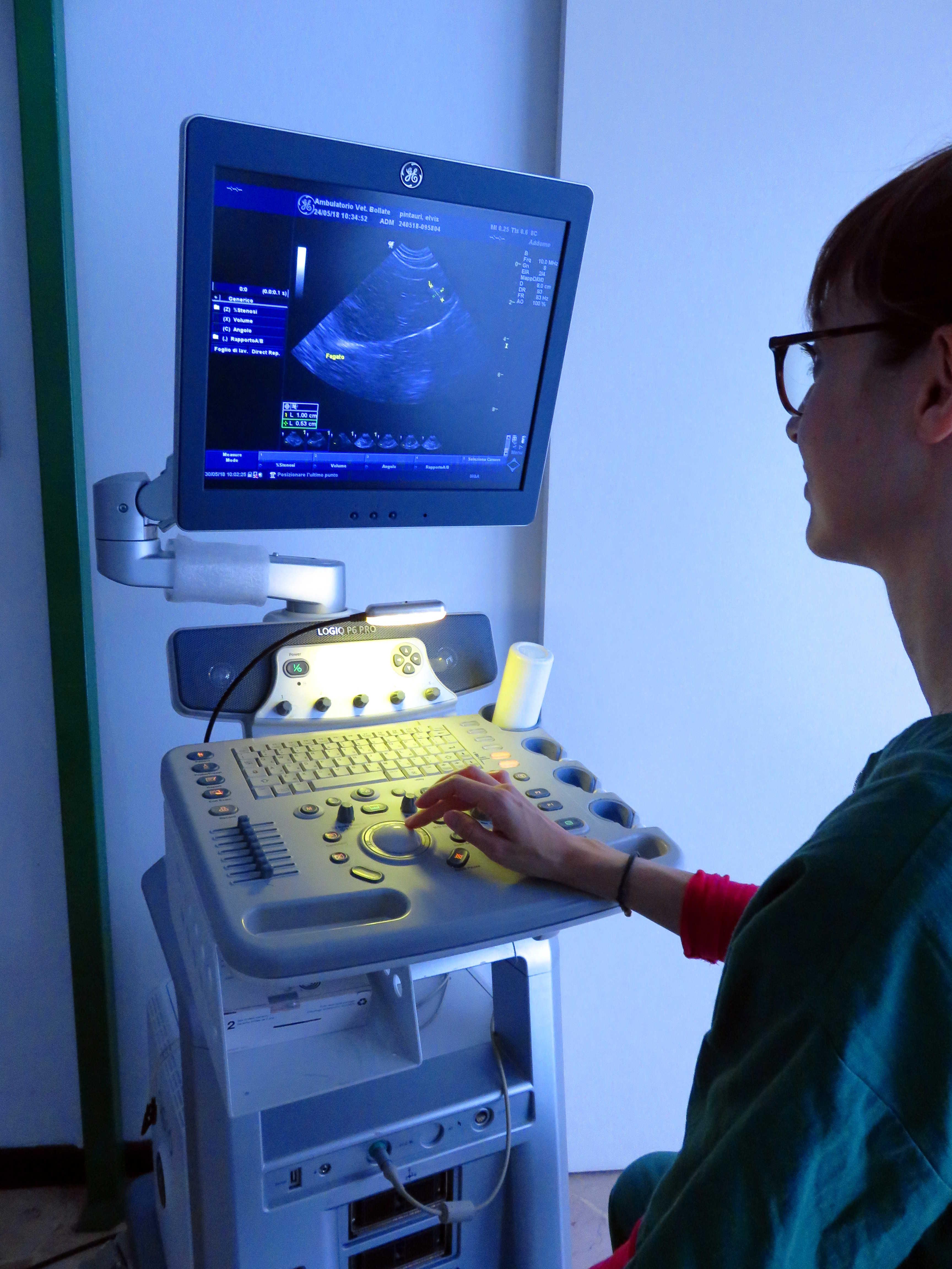 Veterinaria esegue una ecografia
