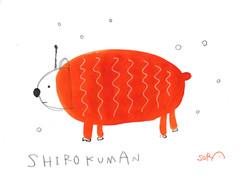 shirokuman