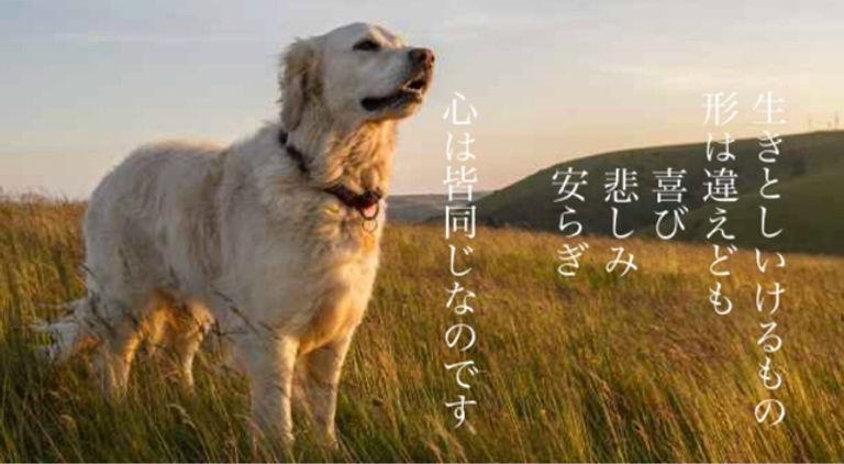 FullSizeR - コピー (4).jpg