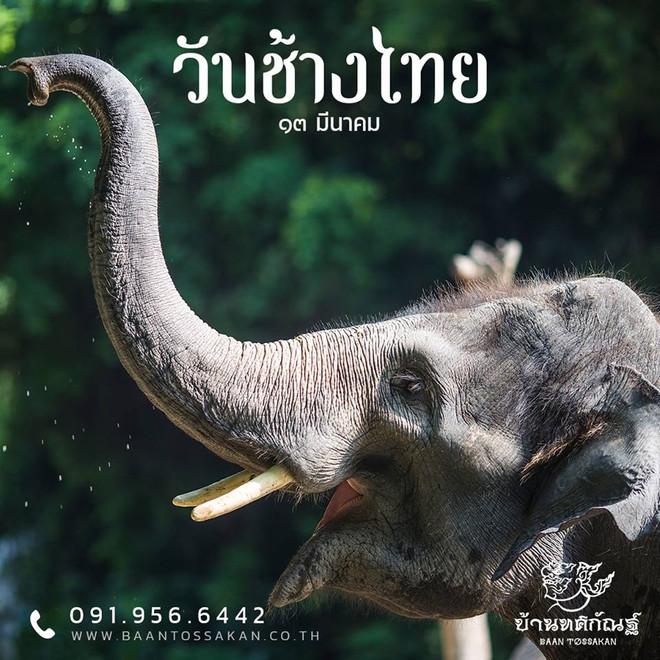 National Thai Elephant Day