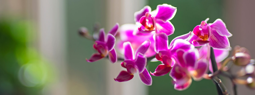 House & home orchids 02 by Phase Drive M