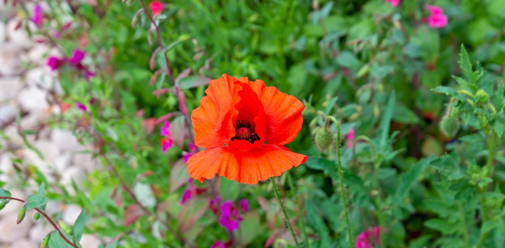 Front garden 04 by Phase Drive Media.jpg