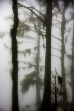 In the Fog.jpg
