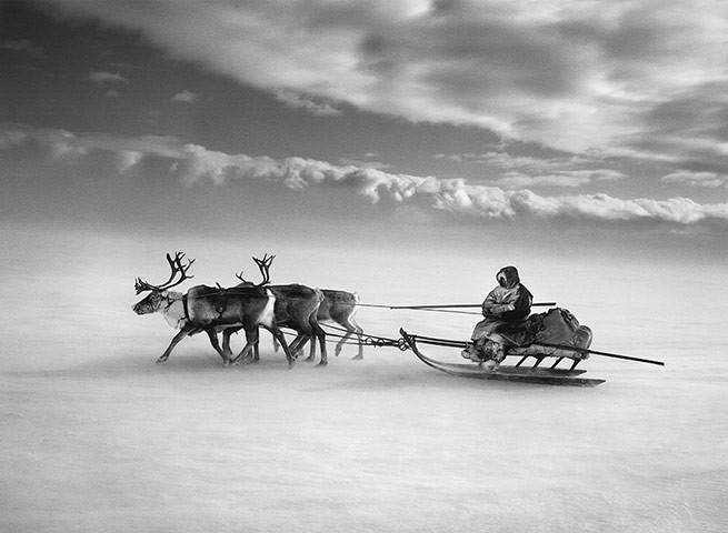 Salgado - Reindeer Sled.jpg