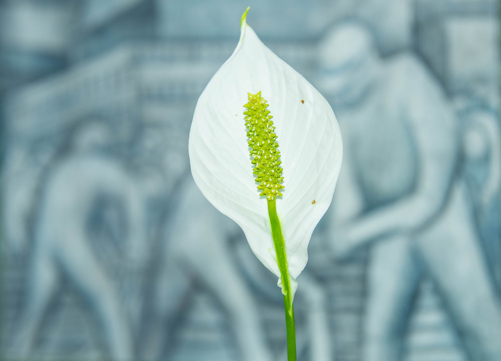 Calla Lily and Mural.jpg