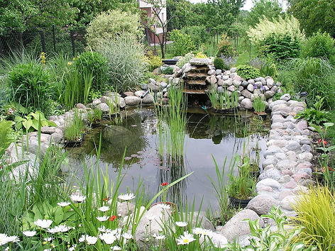 Garden_pond_1.jpg