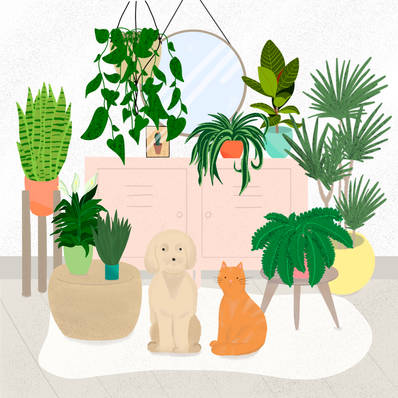 Plants and Pets