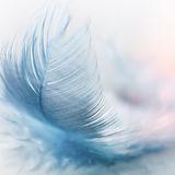 blue feather.jpg