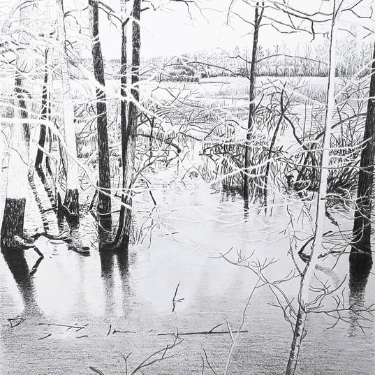 Träd vid vatten (2).jpg