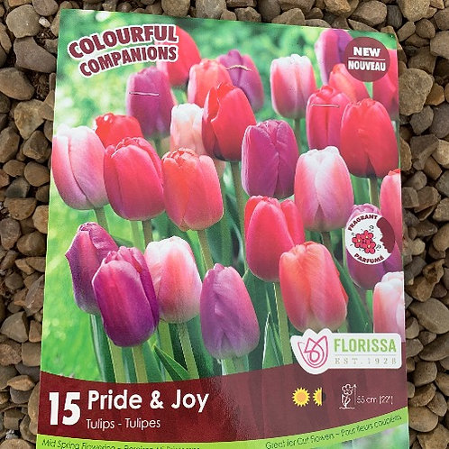 Pride and Joy Tulip Collection - 15 Bulbs