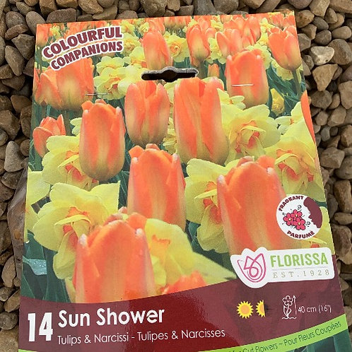 Sun Shower Tulip & Narcisses Collection - 14 Bulbs