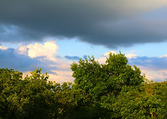 Trees 2 .jpg