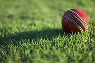 Cricket-Wallpaper-HD.jpg