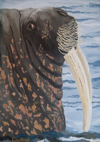 Whiskery Walrus