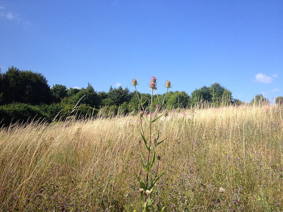 Fields in Whithchurch_hidden alongside A