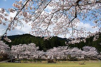 熊野市神川町 桜祭り会場