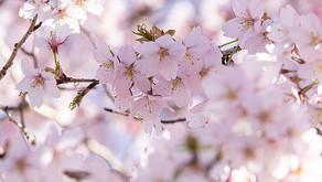 10/23 日本クマノザクラの会 2021年第2回オンライン学習会を開催