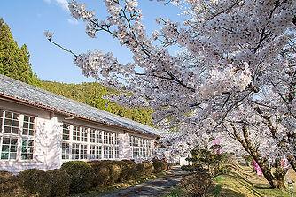 熊野市神川町 桜の名所