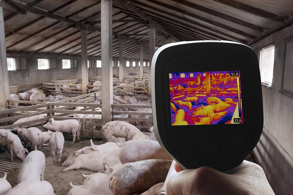 vet thermal imaging