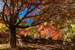 Landscape Photogray