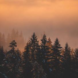 2019_12_03_Sunset_Sapins_Nuages_Lesgets_