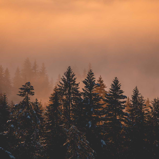 2019_12_03_Sunset_Sapins_Nuages_Lesgets_