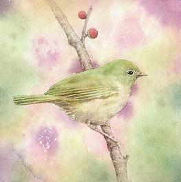 「春告げ」鴬:水彩画