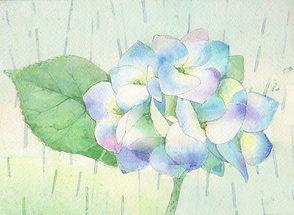 和風イラスト「五月雨(紫陽花)」水彩画・福井良佑