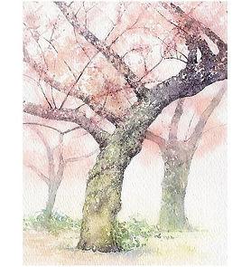 水彩画・日本の風景「薫風:桜」福井良佑